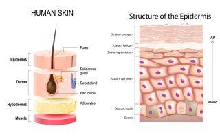 Skin Diagrams copy